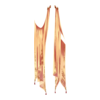 https://www.eldarya.fr/static/img/item/player/icon/00e8b2a0fd3d70e5f68fcc70469f21c6.png