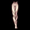 https://www.eldarya.fr/static/img/item/player/icon/1345d126882cc224f4d2f53a2be765b6.png