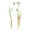 http://eldarya.fr/static/img/item/player//icon/5a3032b319cab9918ce2b08c65e22e62~1496761694.png
