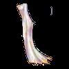 http://www.eldarya.fr/static/img/item/player/icon/9d6df3cfe823ccfd966da94d834fc5e5.png