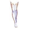 http://www.eldarya.fr/static/img/item/player//icon/a84e851d7da778e5ee3c4fdb901ffe80~1480614679.png