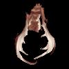 https://www.eldarya.fr/static/img/item/player/icon/d6af2c086822bb929891ecd1d0b16474.png